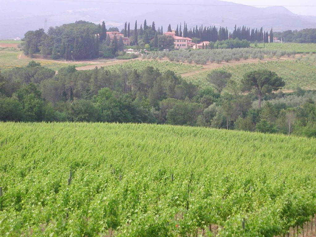 Pasqua in Toscana alla Fattoria di Petrognano - Viaggiare News